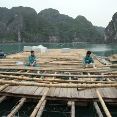 Workers at the Pearl farm